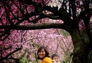 春暖花开人欢笑