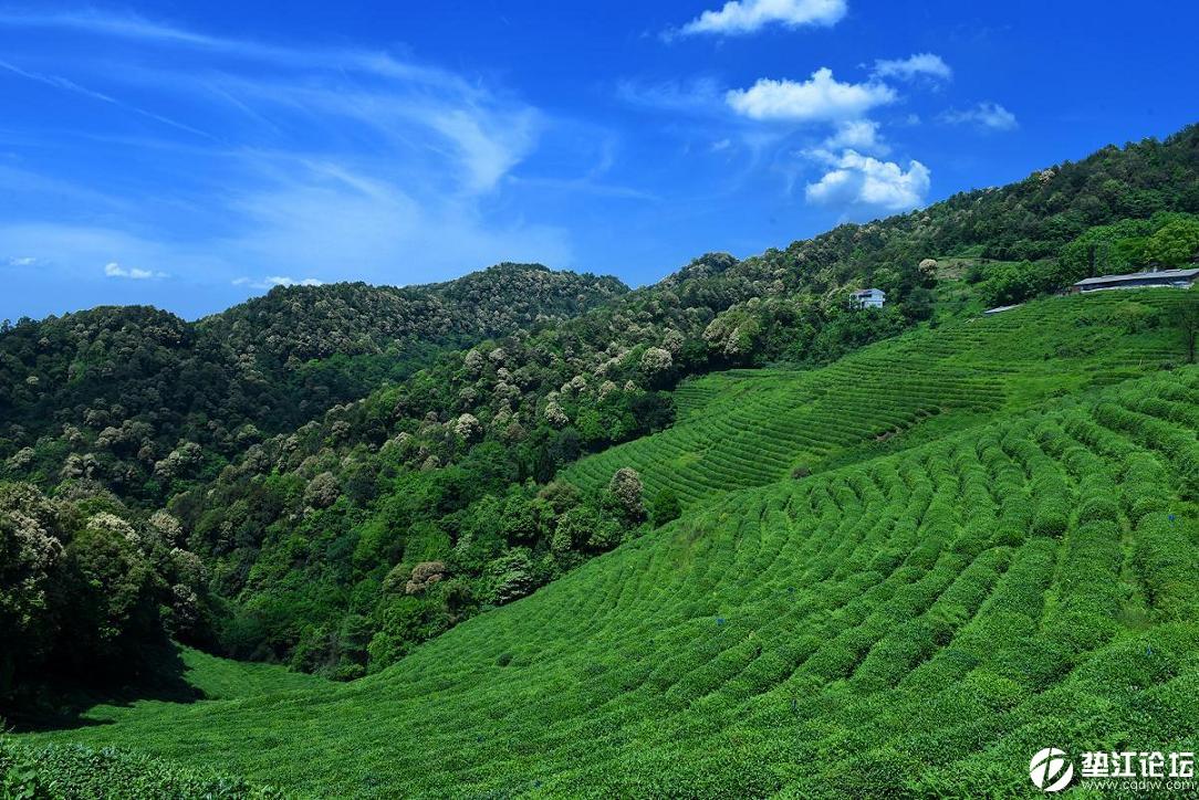 变频话茶山风景背景