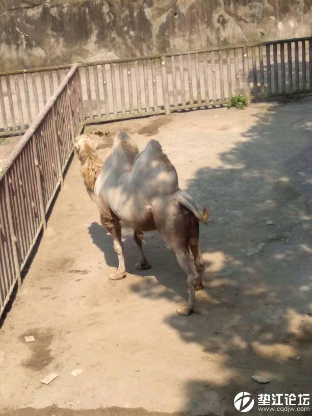 我在重庆动物园等你!