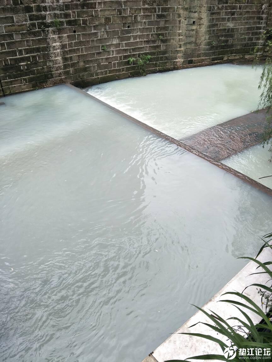 桂溪河污染太严重了,下午四点多经过断桥拍的