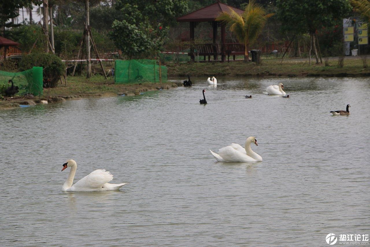 海南映象73——海口天鹅湖动物养殖基地