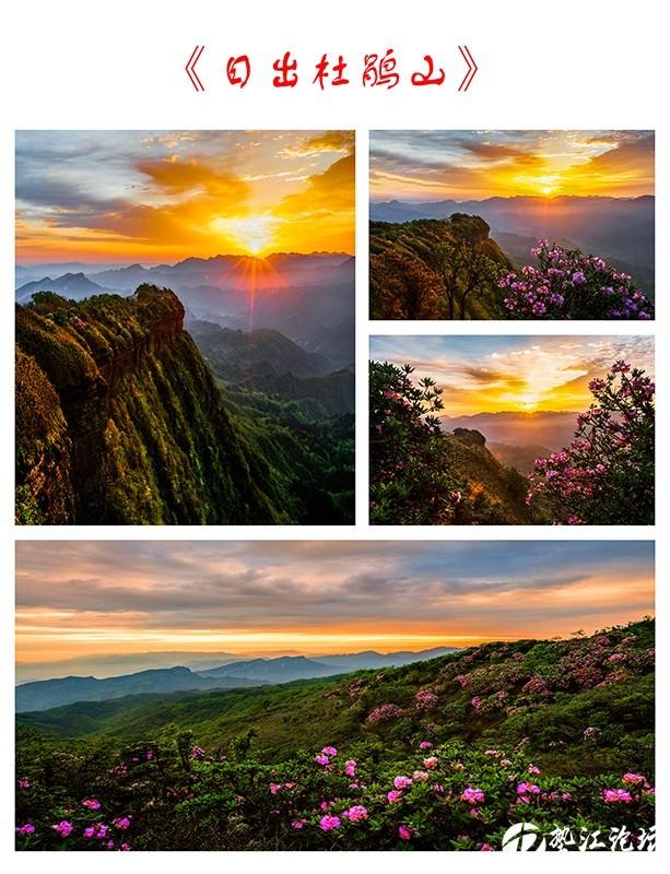 《日出杜鹃山》-1.jpg