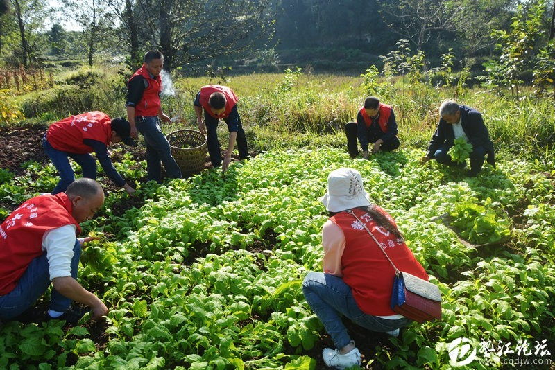 【脫貧攻堅進行時】墊江論壇愛心志愿者幫助建卡貧困戶移栽榨菜