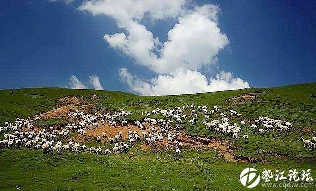 蒙古向中国捐三万只羊,烤全羊估计要降价了