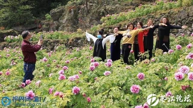 【视界网】重庆垫江:牡丹园景区已迎来10万余游客